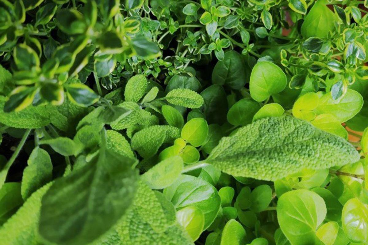 Ogrody Świata - Projektowanie ogrodów - Kąciki ziołowe